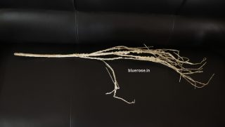 artificial white roots (2)